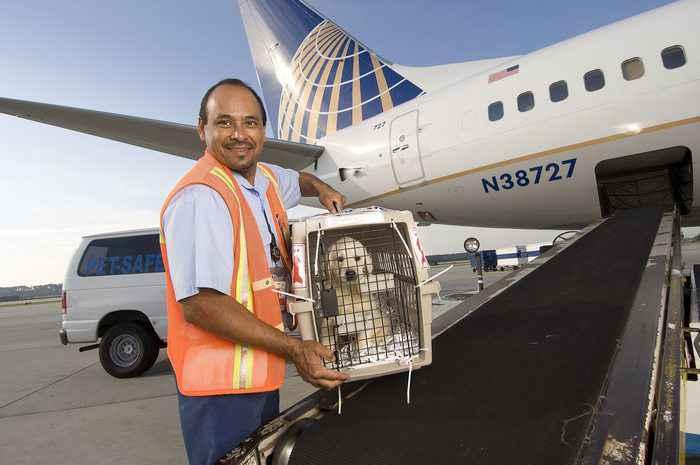 dịch vụ vận chuyển chó mèo